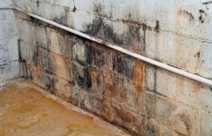 Ursachen für Schimmel im Keller gibt es viele